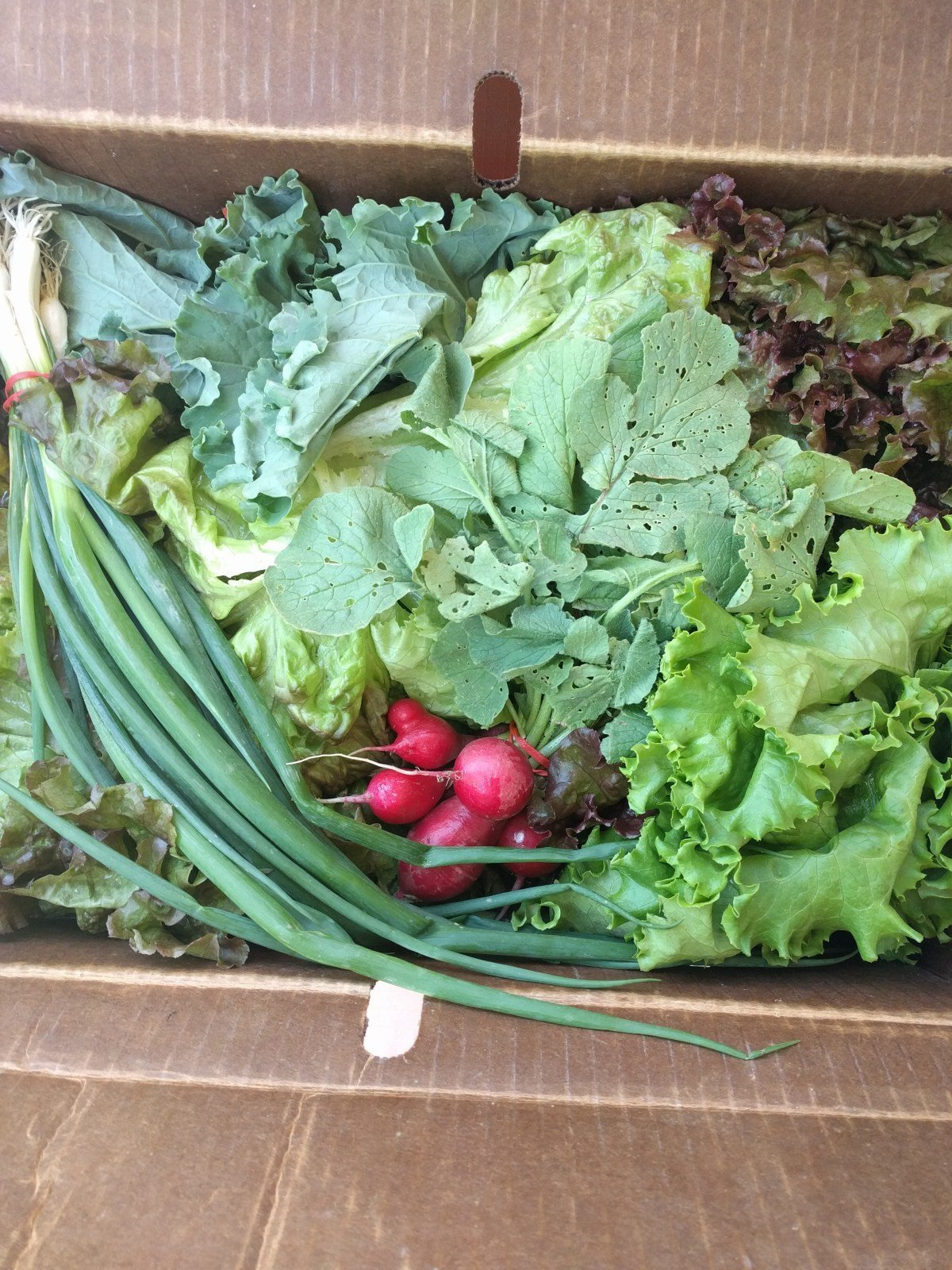 Community Flavor:Fresh Ideas from my CSA Box